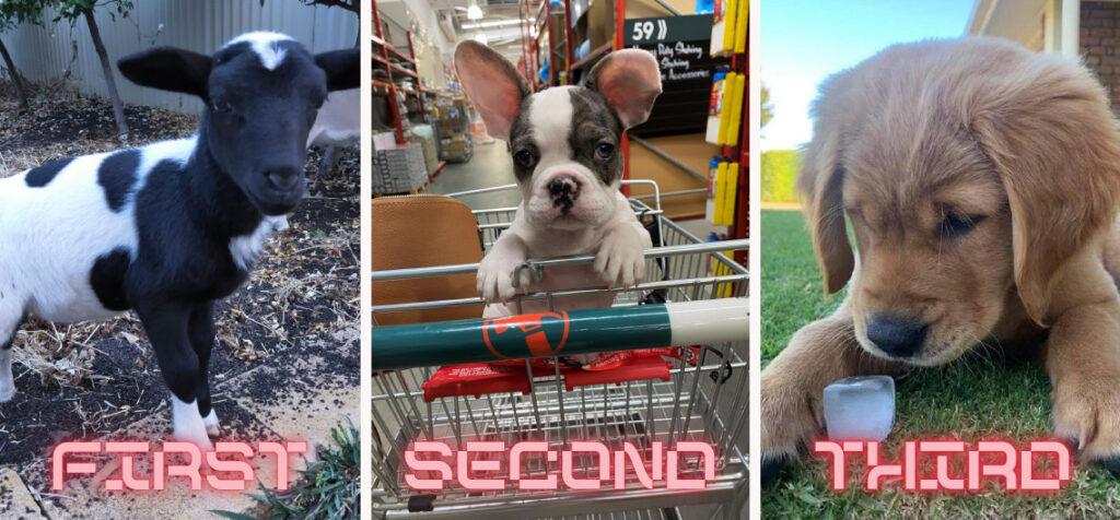 MGA Whittles Cutest Pet Winners